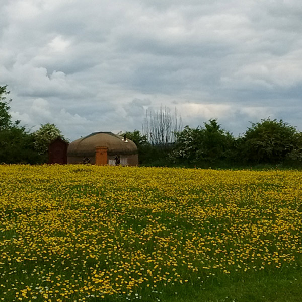 A millie's Yurt in a field of yellow flowers